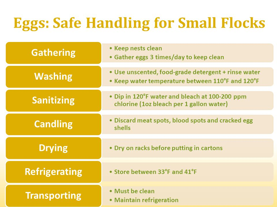 Eggs: Safe Handling for Small Flocks Keep nests clean Gather eggs 3 times/day to keep clean Gathering Use unscented, food-grade detergent + rinse wate