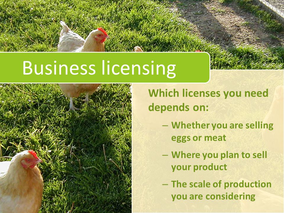 Business licensing Which licenses you need depends on: – Whether you are selling eggs or meat – Where you plan to sell your product – The scale of production you are considering
