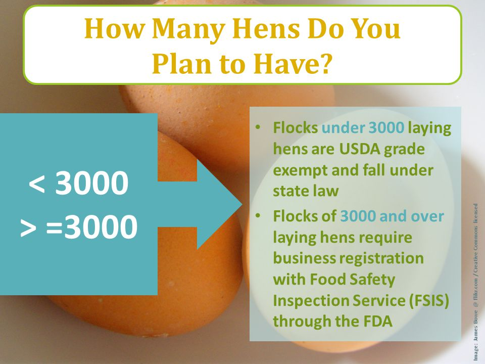 Flocks under 3000 laying hens are USDA grade exempt and fall under state law Flocks of 3000 and over laying hens require business registration with Fo