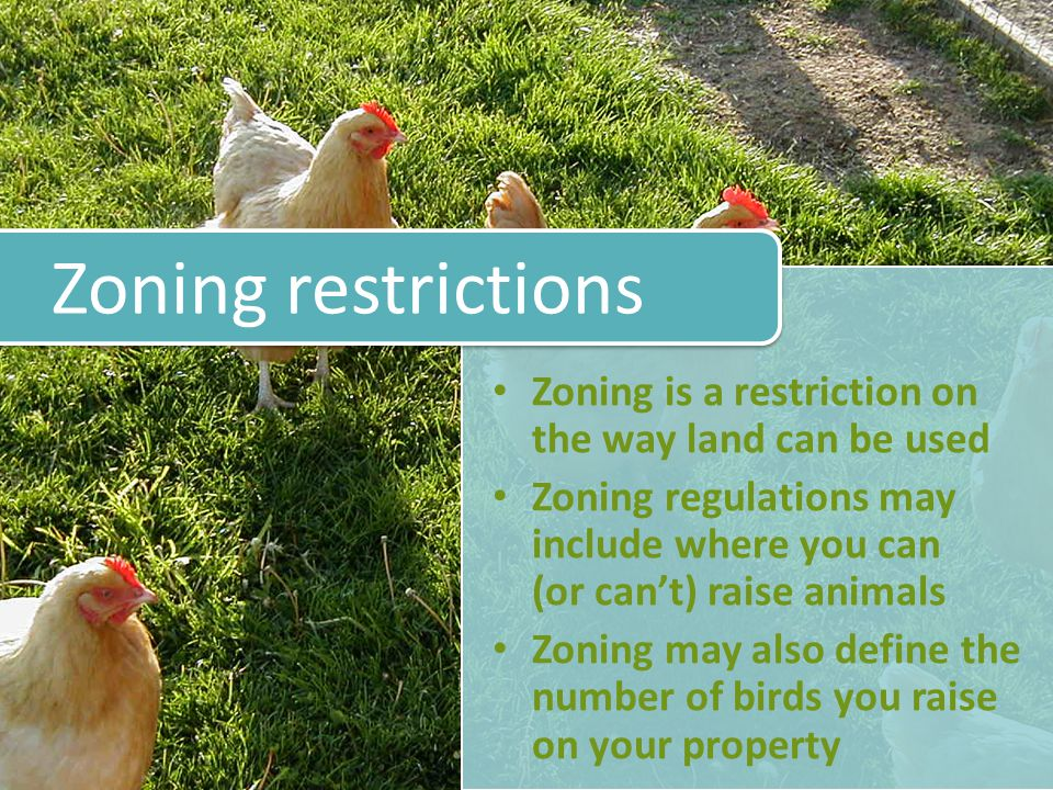Zoning is a restriction on the way land can be used Zoning regulations may include where you can (or cant) raise animals Zoning may also define the number of birds you raise on your property Zoning restrictions