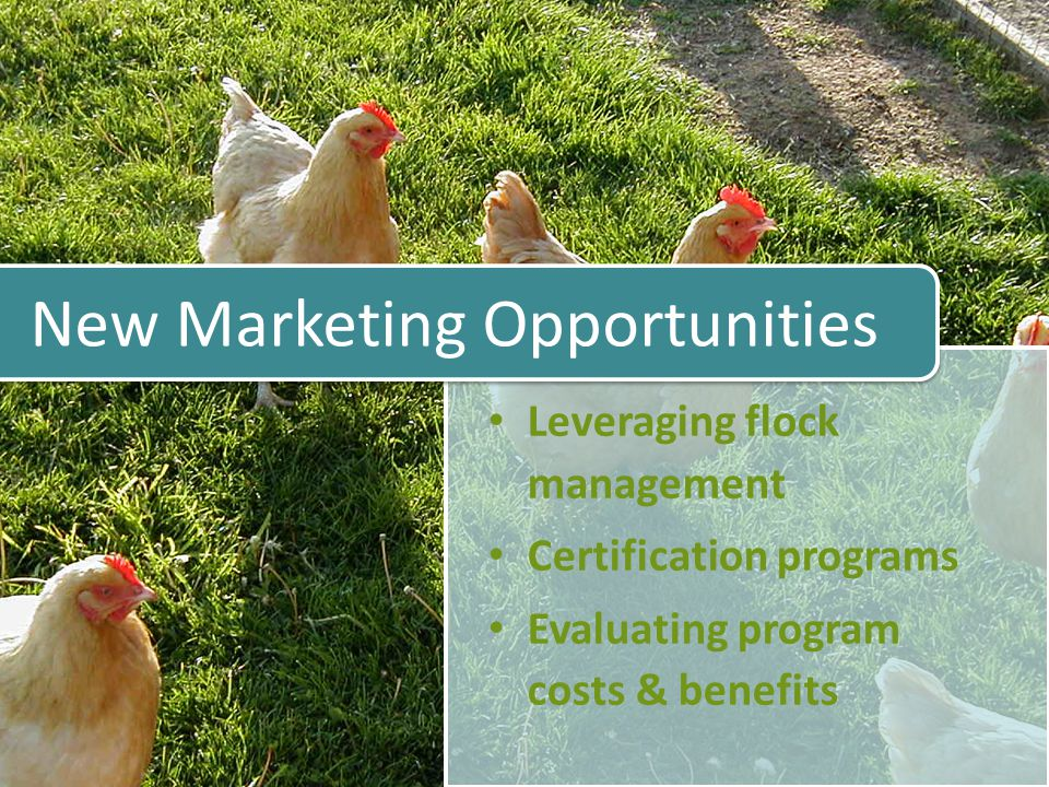Certification and Marketing Consumers are interested in how livestock are raised, handled & processed Certification may allow you to secure a premium for product or expand market reach – Such as specialty food stores and restaurants that require that their animal products be sourced from humanely raised animals How you manage your flock (your stewardship practices) can influence your marketing opportunities