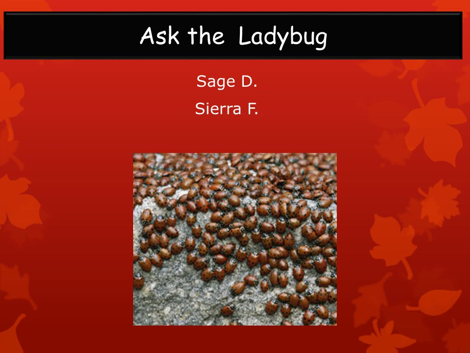 Sage D. Sierra F. Ask the Ladybug