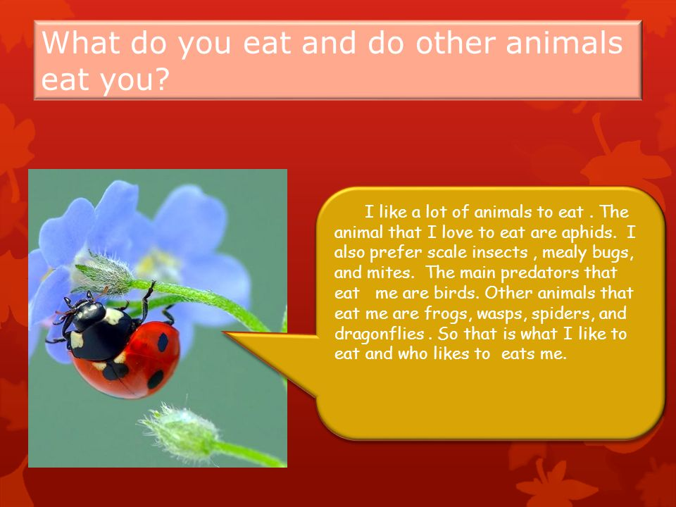 What do you eat and do other animals eat you. I like a lot of animals to eat.