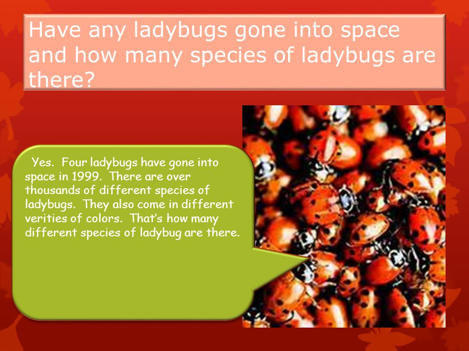 Have any ladybugs gone into space and how many species of ladybugs are there.