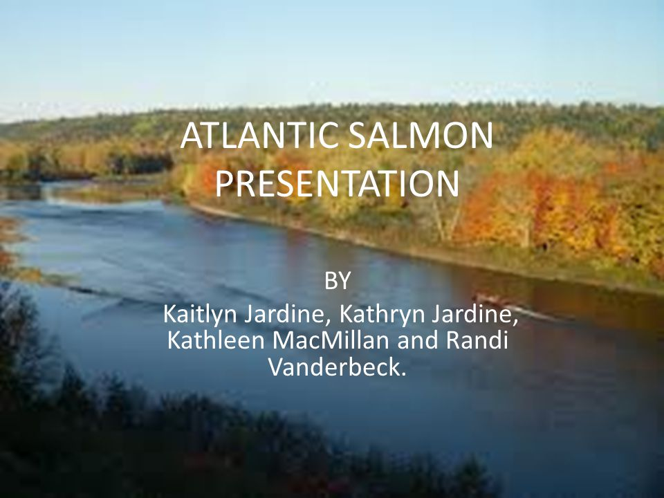 ATLANTIC SALMON PRESENTATION BY Kaitlyn Jardine, Kathryn Jardine, Kathleen MacMillan and Randi Vanderbeck.
