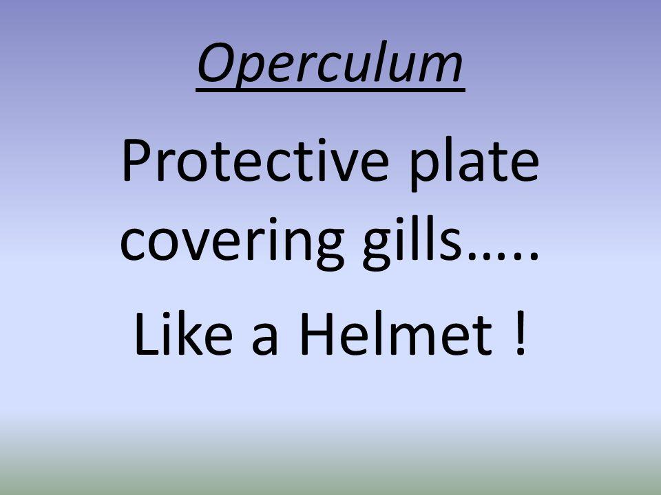 Operculum Protective plate covering gills….. Like a Helmet !