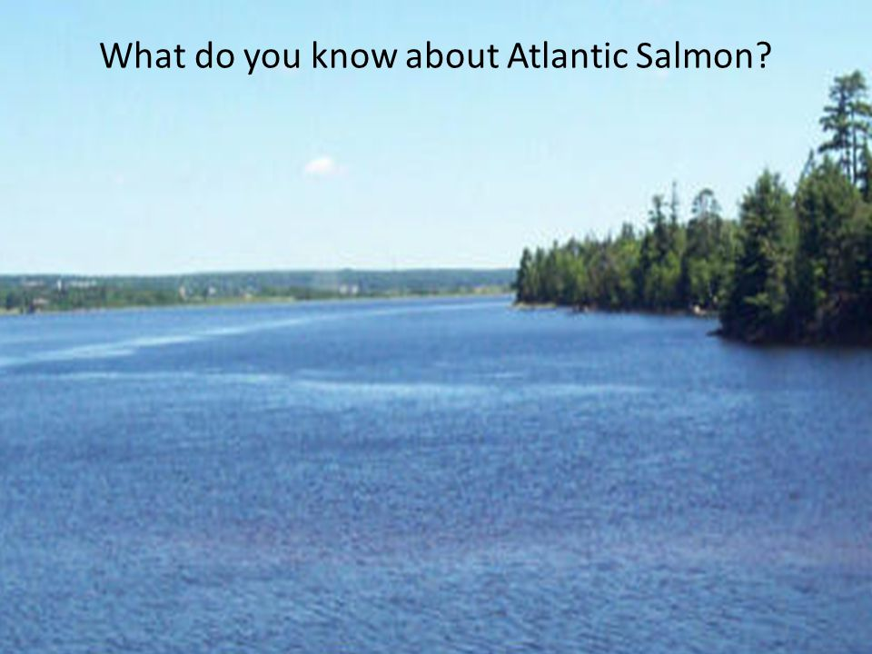 What do you know about Atlantic Salmon