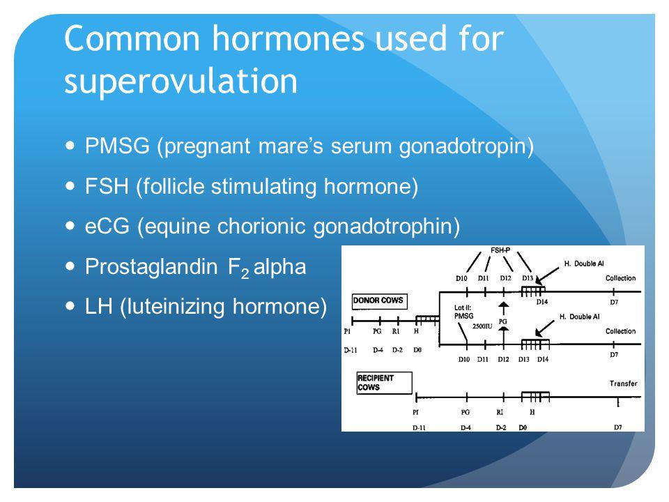 Common hormones used for superovulation PMSG (pregnant mares serum gonadotropin) FSH (follicle stimulating hormone) eCG (equine chorionic gonadotrophin) Prostaglandin F 2 alpha LH (luteinizing hormone) http://www.nzdl.org/gsdl/collect/fnl2.2/archives/HASH42a2.dir/p16.gif