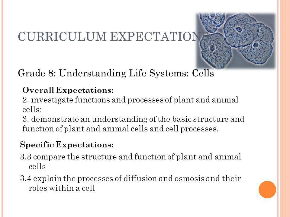 CURRICULUM EXPECTATIONS Specific Expectations: 3.3 compare the structure and function of plant and animal cells 3.4 explain the processes of diffusion and osmosis and their roles within a cell Grade 8: Understanding Life Systems: Cells Overall Expectations: 2.