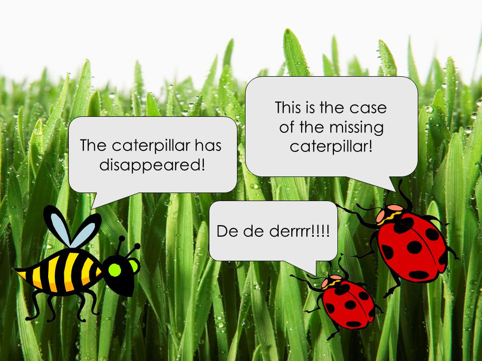 The caterpillar has disappeared! This is the case of the missing caterpillar! De de derrrr!!!!