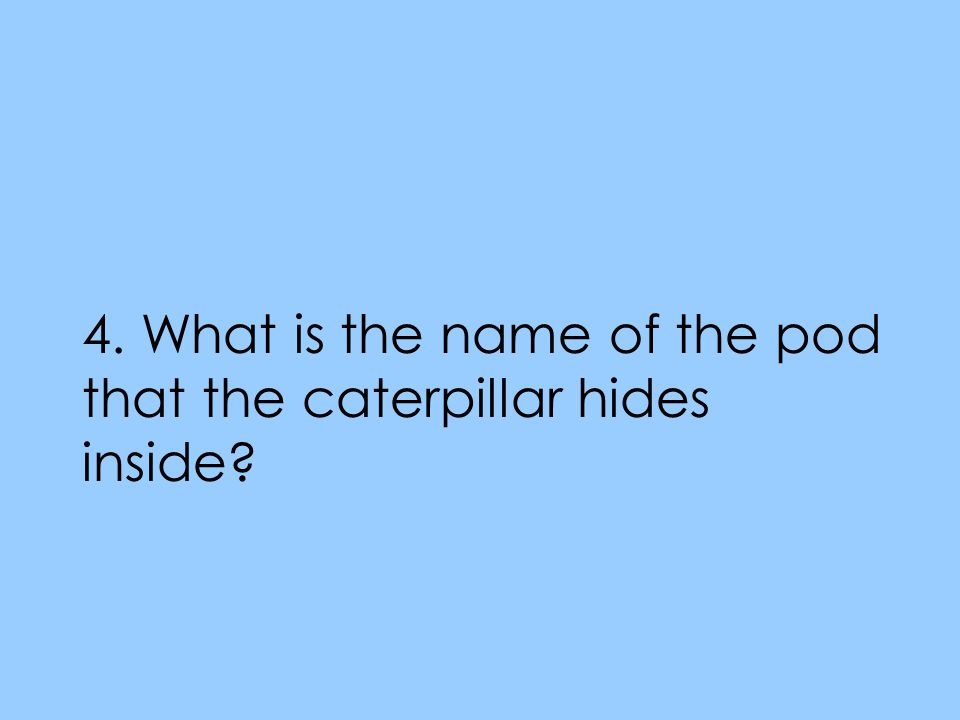 4. What is the name of the pod that the caterpillar hides inside?