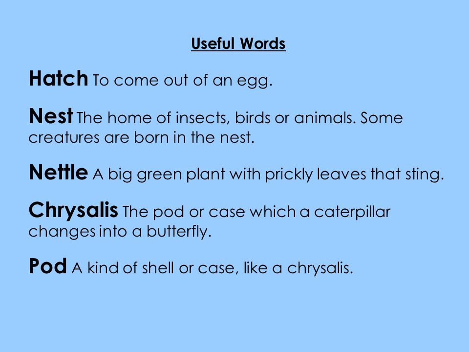 Useful Words Hatch To come out of an egg.Nest The home of insects, birds or animals.