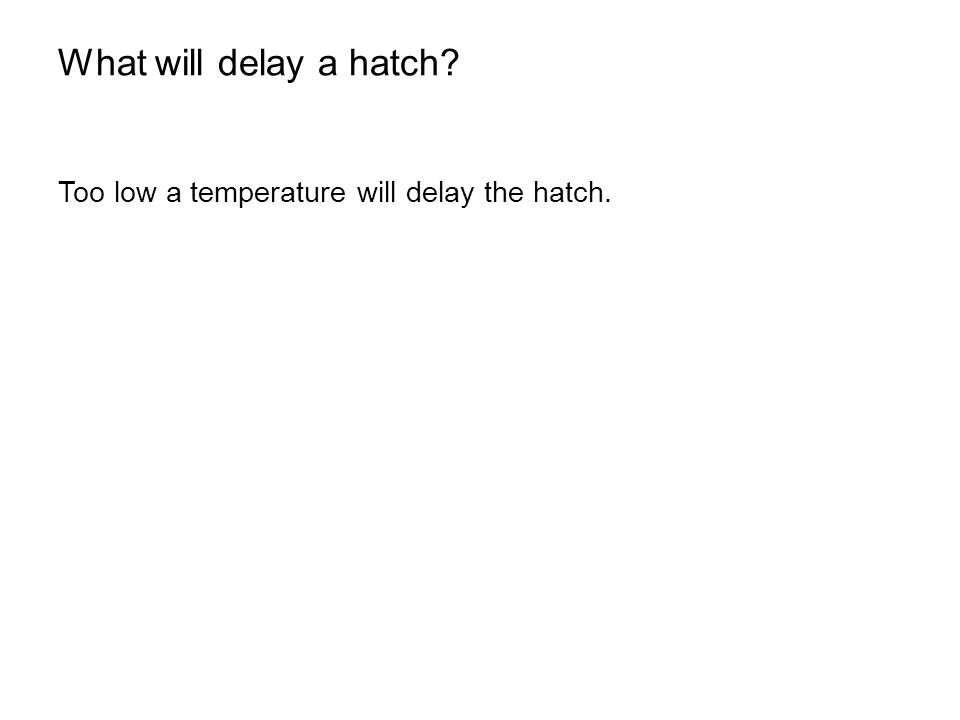 What will delay a hatch? Too low a temperature will delay the hatch.