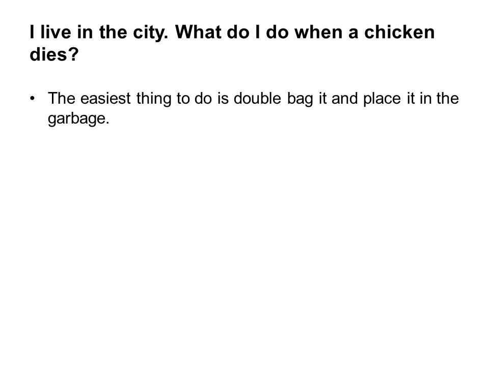 I live in the city. What do I do when a chicken dies? The easiest thing to do is double bag it and place it in the garbage.