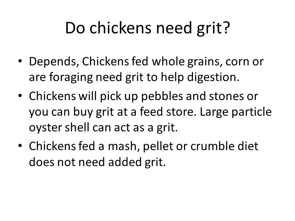 Do chickens need grit? Depends, Chickens fed whole grains, corn or are foraging need grit to help digestion. Chickens will pick up pebbles and stones