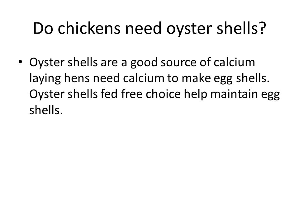 Do chickens need oyster shells? Oyster shells are a good source of calcium laying hens need calcium to make egg shells. Oyster shells fed free choice