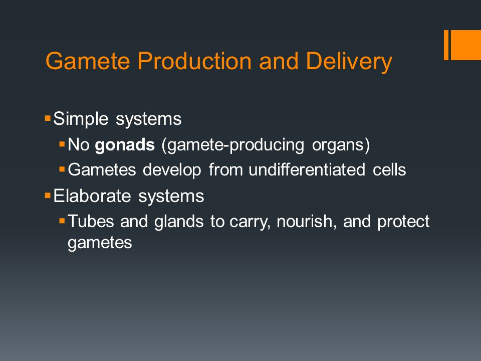 Gamete Production and Delivery Simple systems No gonads (gamete-producing organs) Gametes develop from undifferentiated cells Elaborate systems Tubes and glands to carry, nourish, and protect gametes
