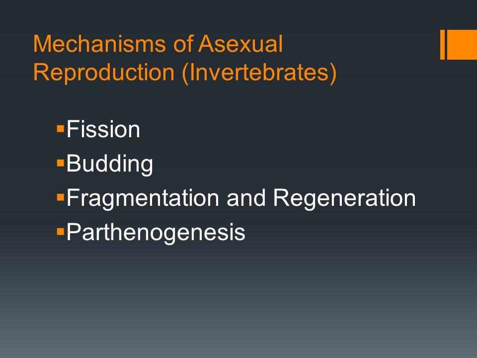 Mechanisms of Asexual Reproduction (Invertebrates) Fission Budding Fragmentation and Regeneration Parthenogenesis