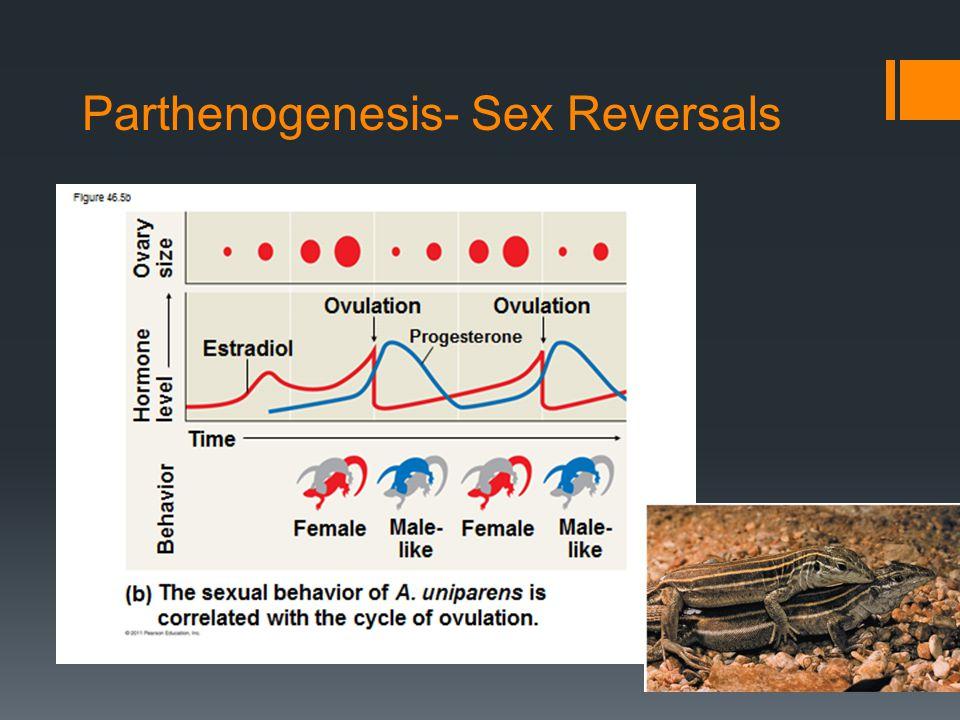 Parthenogenesis- Sex Reversals