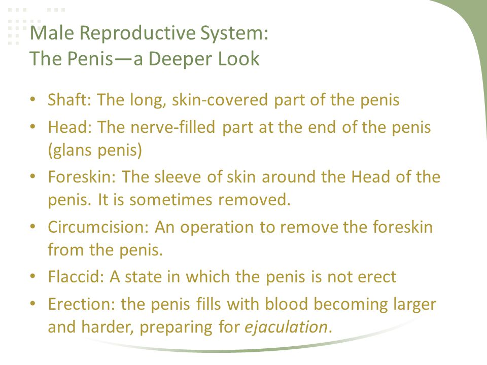 Male Reproductive System: The Penisa Deeper Look Shaft: The long, skin-covered part of the penis Head: The nerve-filled part at the end of the penis (
