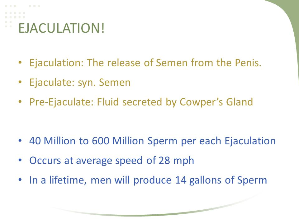 EJACULATION! Ejaculation: The release of Semen from the Penis. Ejaculate: syn. Semen Pre-Ejaculate: Fluid secreted by Cowpers Gland 40 Million to 600