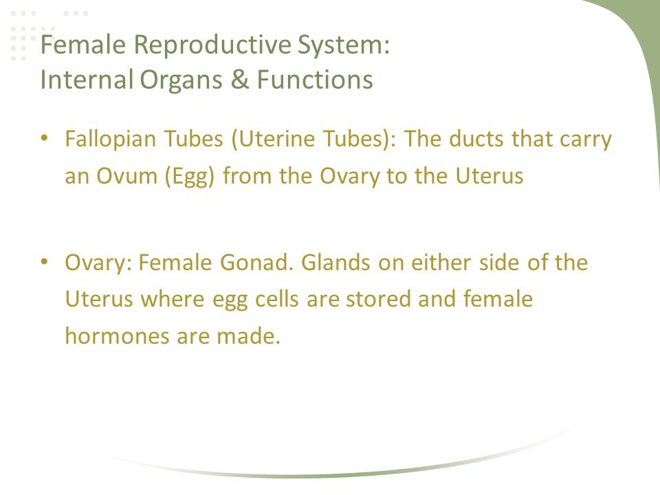 Female Reproductive System: Internal Organs & Functions Fallopian Tubes (Uterine Tubes): The ducts that carry an Ovum (Egg) from the Ovary to the Uter
