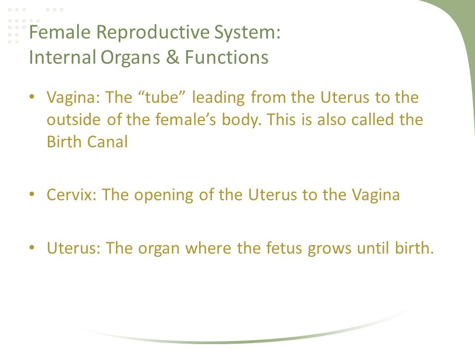 Female Reproductive System: Internal Organs & Functions Vagina: The tube leading from the Uterus to the outside of the females body. This is also call