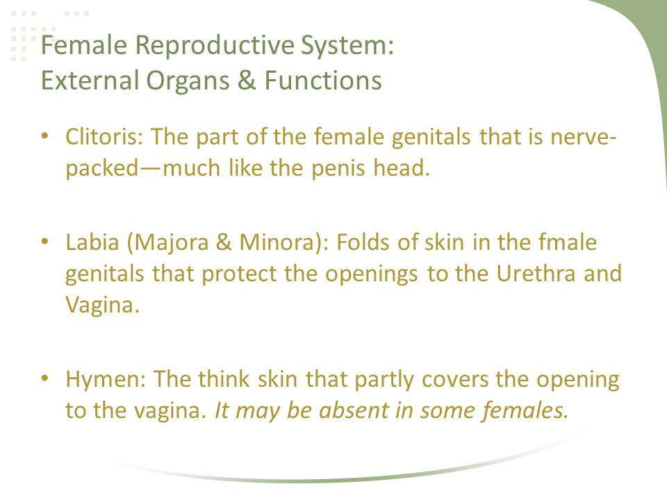 Female Reproductive System: External Organs & Functions Clitoris: The part of the female genitals that is nerve- packedmuch like the penis head. Labia