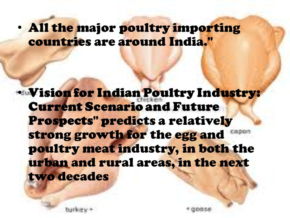 All the major poultry importing countries are around India. Vision for Indian Poultry Industry: Current Scenario and Future Prospects predicts a relatively strong growth for the egg and poultry meat industry, in both the urban and rural areas, in the next two decades