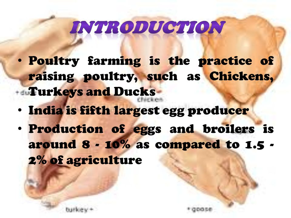 Poultry farming is the practice of raising poultry, such as Chickens, Turkeys and Ducks India is fifth largest egg producer Production of eggs and broilers is around 8 - 10% as compared to 1.5 - 2% of agriculture