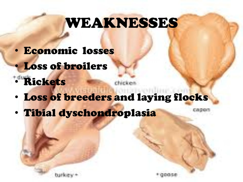 WEAKNESSES Economic losses Loss of broilers Rickets Loss of breeders and laying flocks Tibial dyschondroplasia