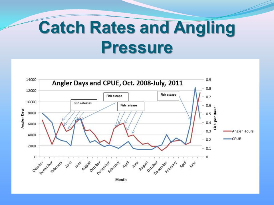 Catch Rates and Angling Pressure