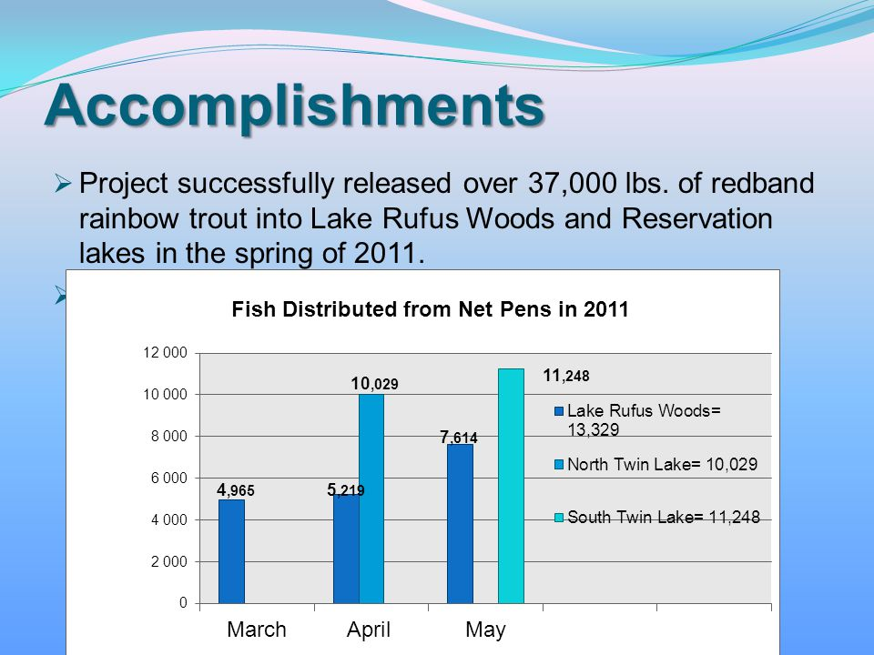 Project successfully released over 37,000 lbs. of redband rainbow trout into Lake Rufus Woods and Reservation lakes in the spring of 2011. Average fis