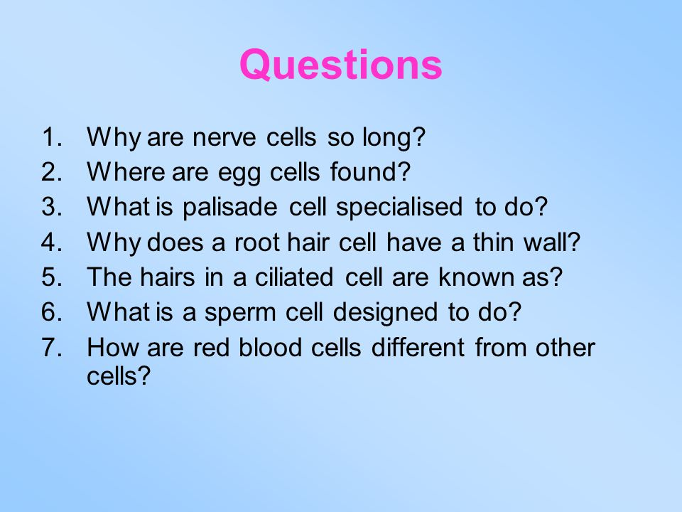 Questions 1.Why are nerve cells so long? 2.Where are egg cells found? 3.What is palisade cell specialised to do? 4.Why does a root hair cell have a th