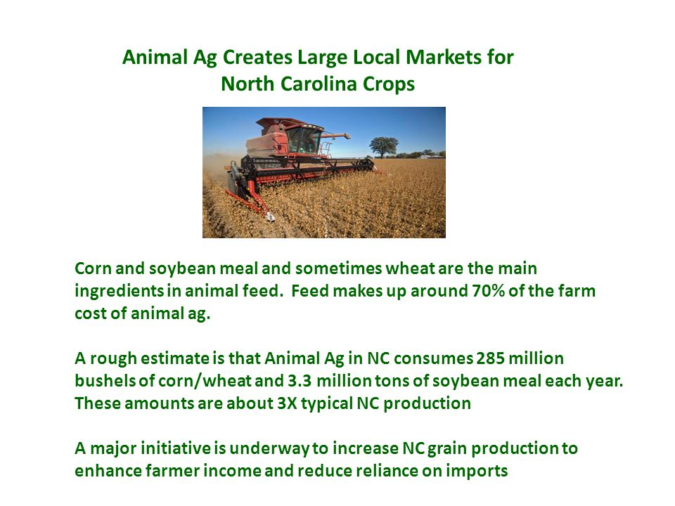 Animal Ag Creates Large Local Markets for North Carolina Crops Corn and soybean meal and sometimes wheat are the main ingredients in animal feed.