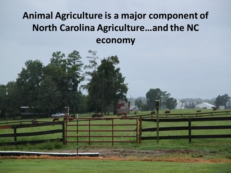 Animal Agriculture is a major component of North Carolina Agriculture…and the NC economy