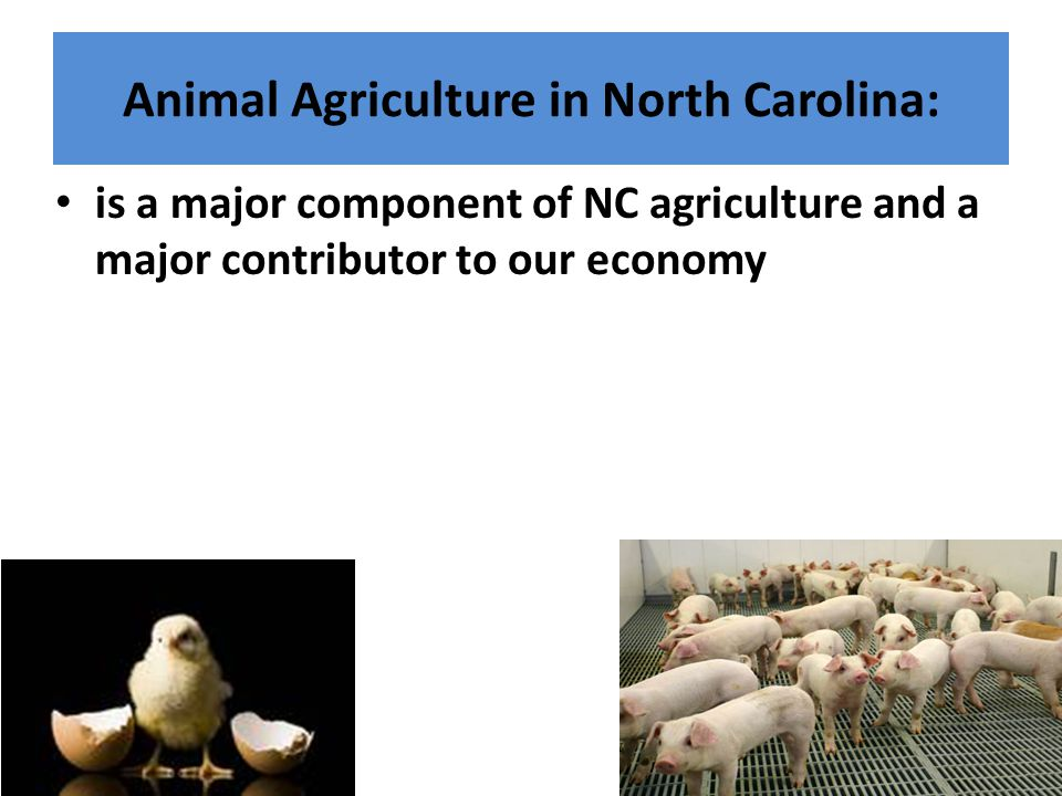 Animal Agriculture in North Carolina: is a major component of NC agriculture and a major contributor to our economy