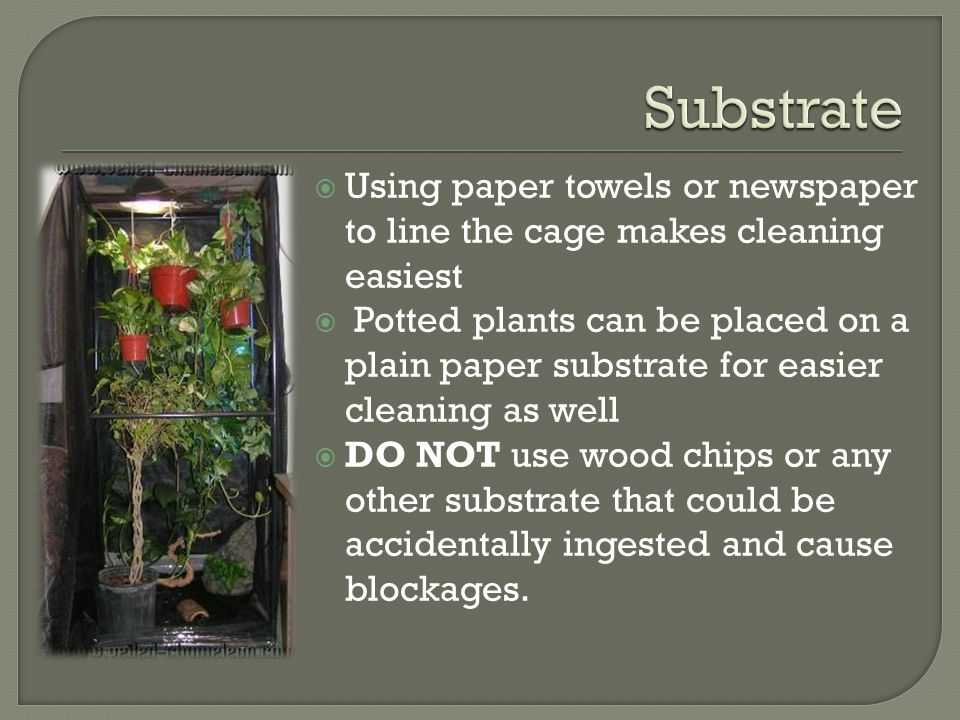 Using paper towels or newspaper to line the cage makes cleaning easiest Potted plants can be placed on a plain paper substrate for easier cleaning as