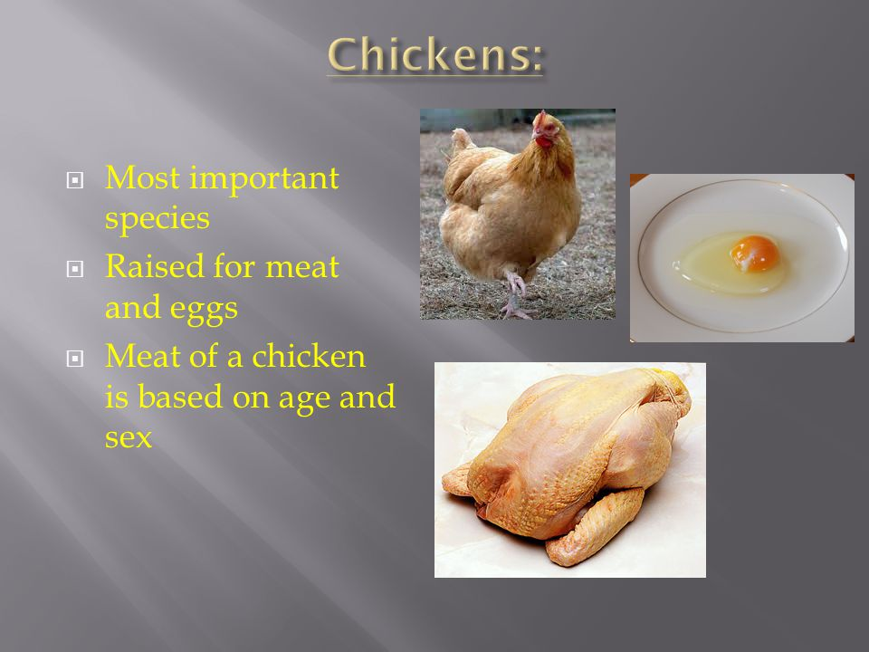 Broiler – Young chicken 6-7 weeks, weighs about 4 pounds.