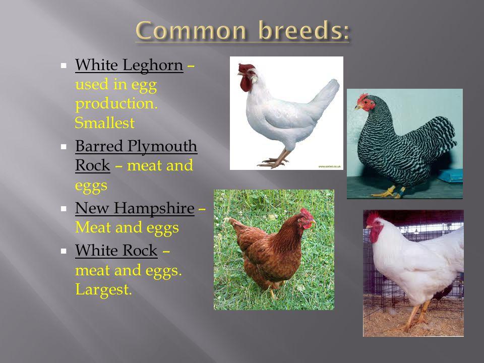 Flightless birds which include: Ostrich, emu, kiwi, cassowary, and rhea.
