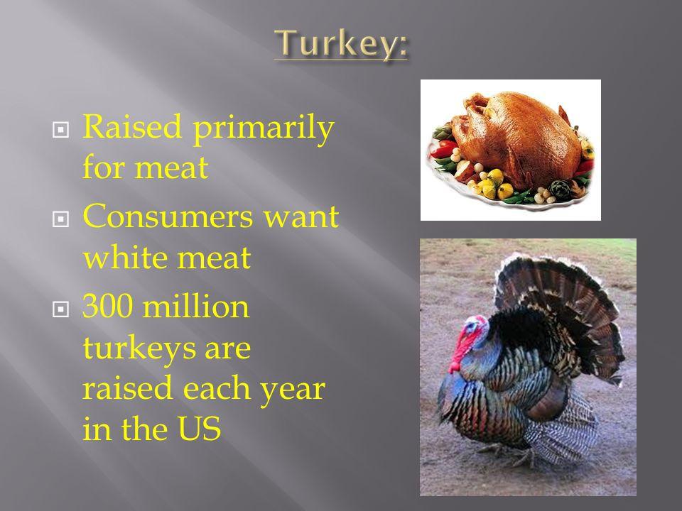 Poult – young turkey Tom – mature male turkey or gobbler. Hen - female turkey