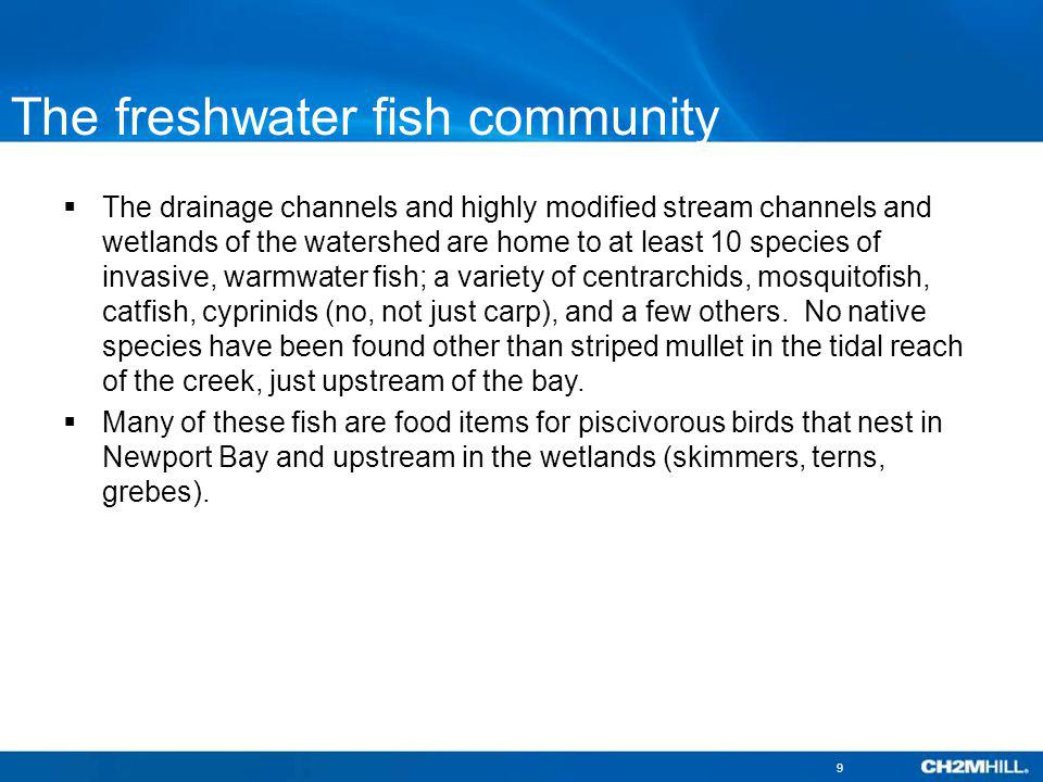 The freshwater fish community The drainage channels and highly modified stream channels and wetlands of the watershed are home to at least 10 species