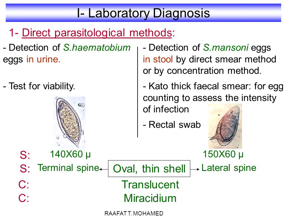 I- Laboratory Diagnosis 1- Direct parasitological methods: - Detection of S.haematobium eggs in urine. - Test for viability. - Detection of S.mansoni