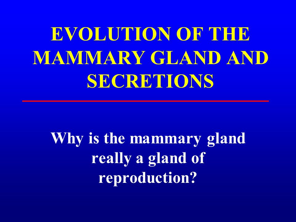EVOLUTION OF THE MAMMARY GLAND AND SECRETIONS Why is the mammary gland really a gland of reproduction?