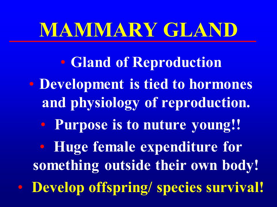 MAMMARY GLAND Gland of Reproduction Development is tied to hormones and physiology of reproduction. Purpose is to nuture young!! Huge female expenditu