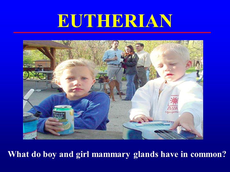 EUTHERIAN What do boy and girl mammary glands have in common?