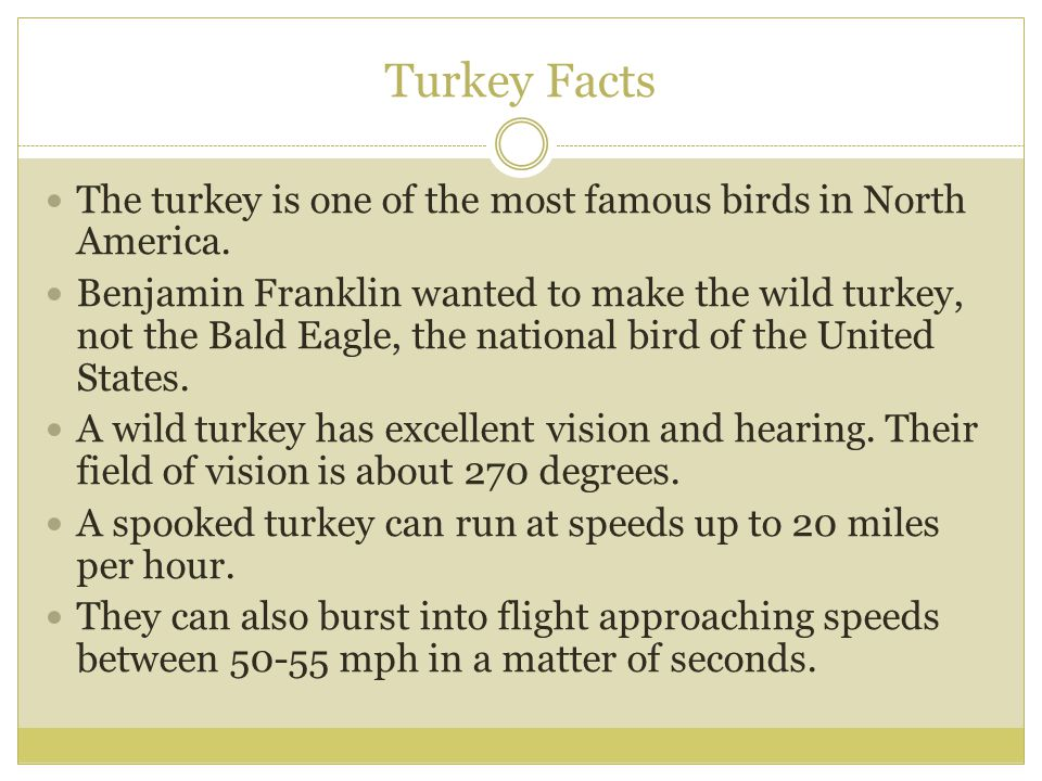 Turkey Facts The turkey is one of the most famous birds in North America. Benjamin Franklin wanted to make the wild turkey, not the Bald Eagle, the na