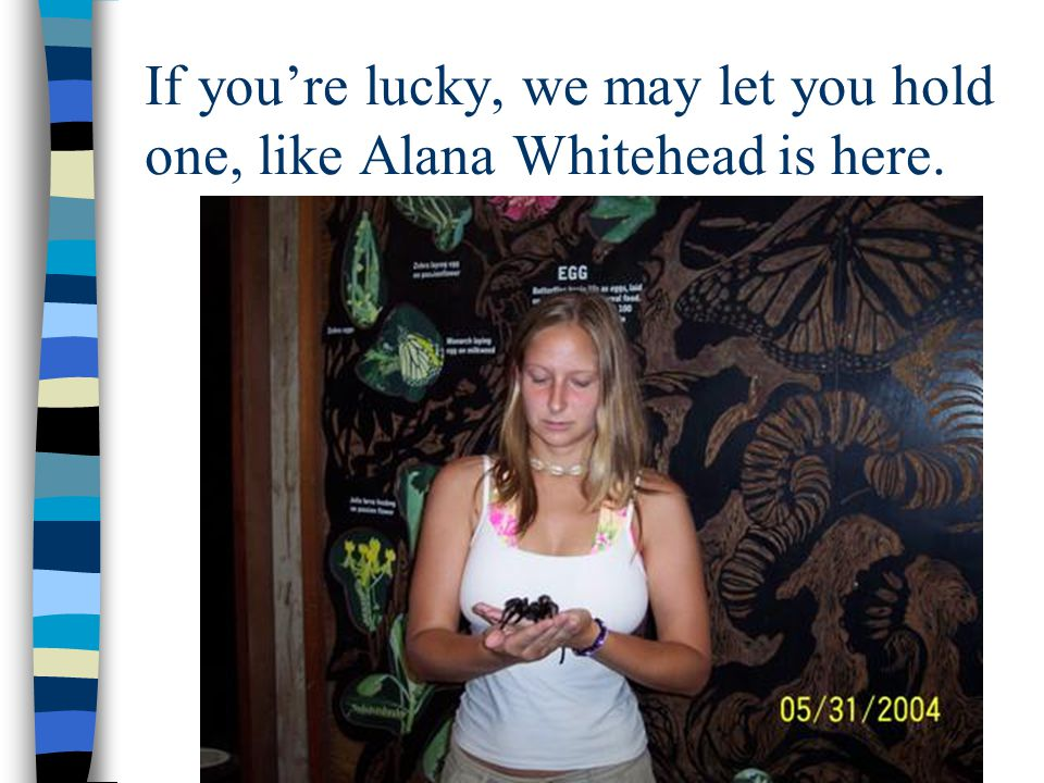 If youre lucky, we may let you hold one, like Alana Whitehead is here.