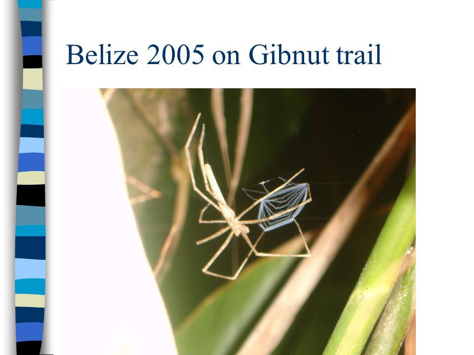 Belize 2005 on Gibnut trail