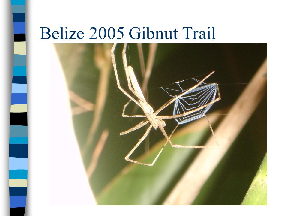 Belize 2005 Gibnut Trail